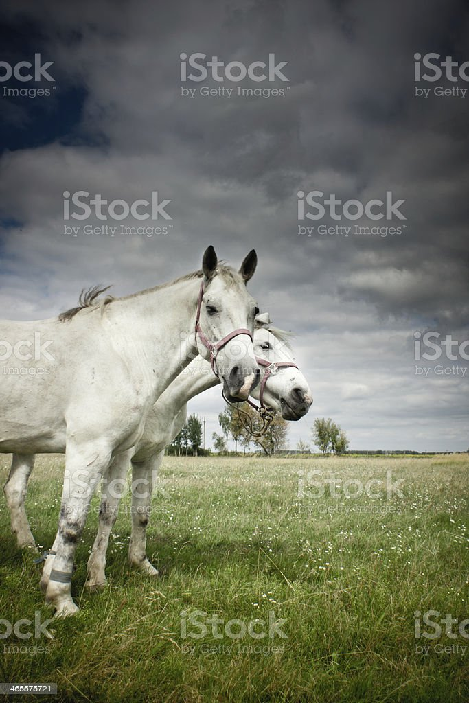 Horse out at grass royalty-free stock photo