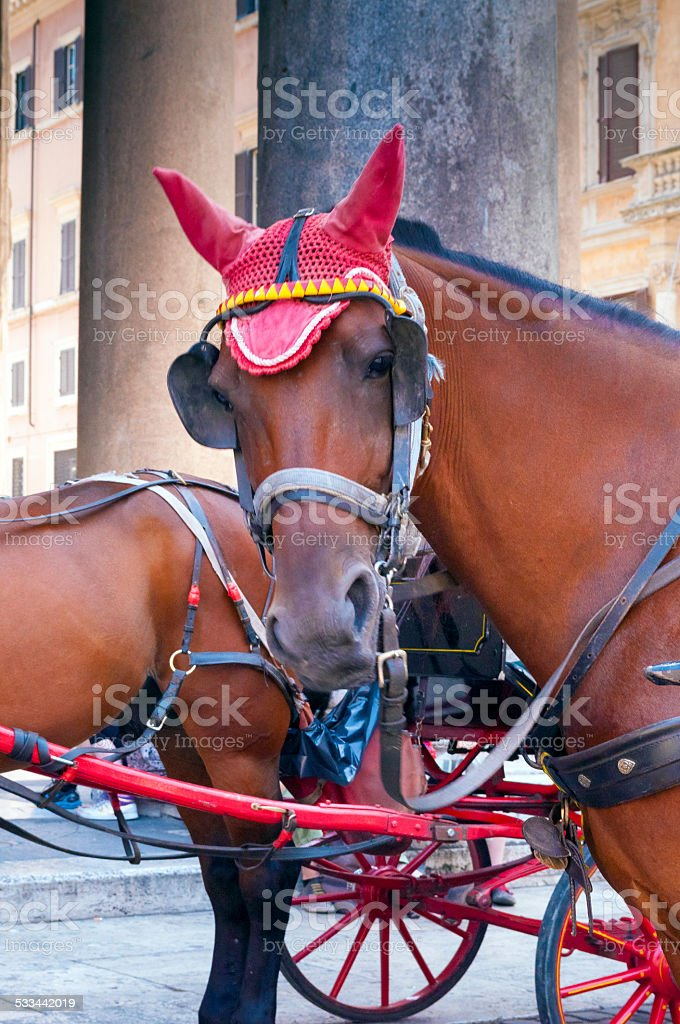 Horse outside Pantheon in Rome,Italy stock photo