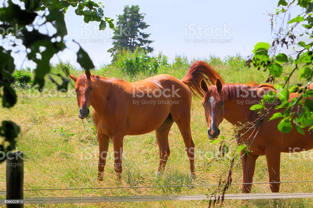 Horse paddock in June stock photo