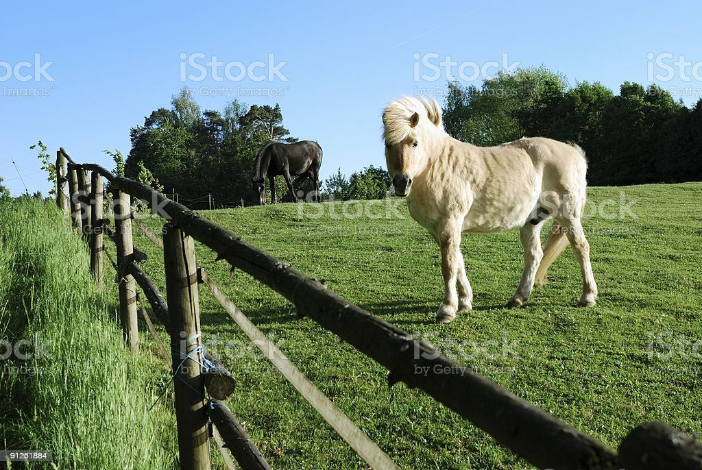 Horse paddock stock photo