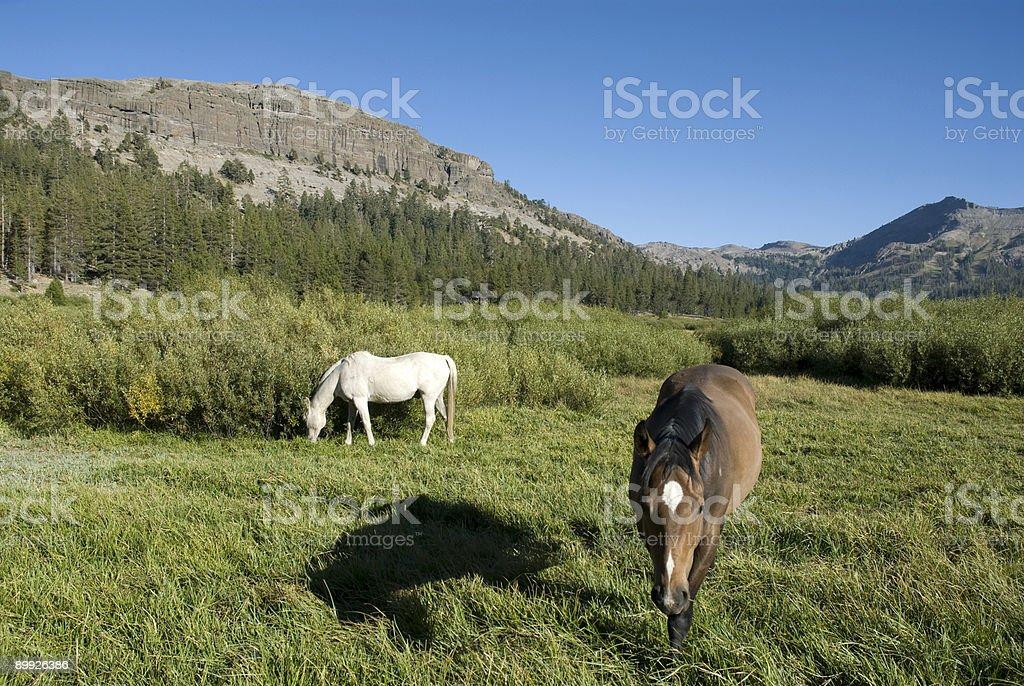 Horse Paradise royalty-free stock photo