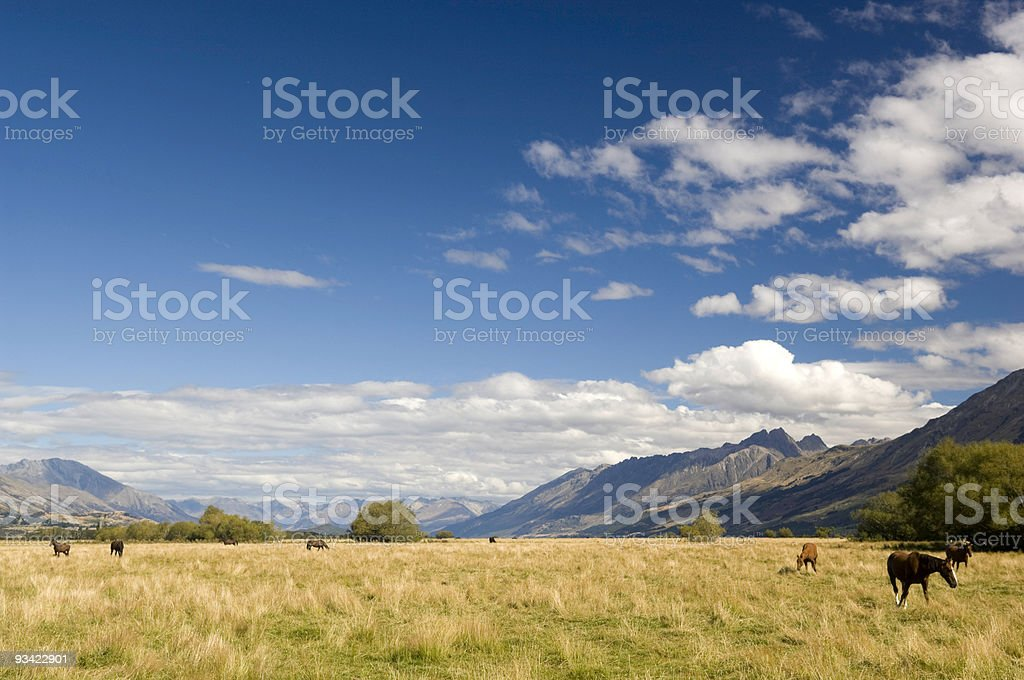 Horse Paradise stock photo