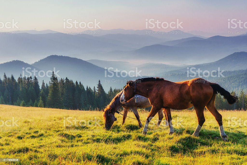 Horse pasture in the mountains. stock photo