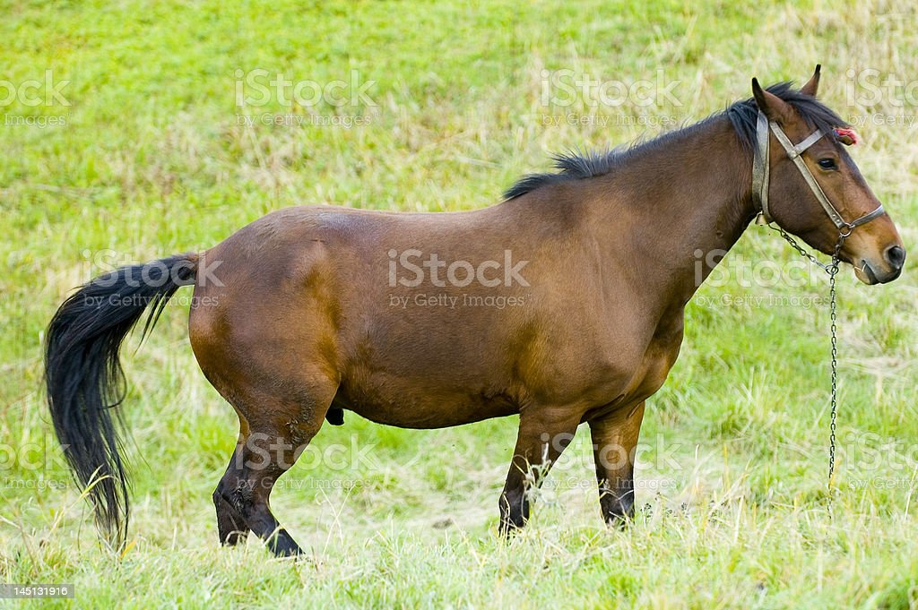 馬 ロイヤリティフリーストックフォト