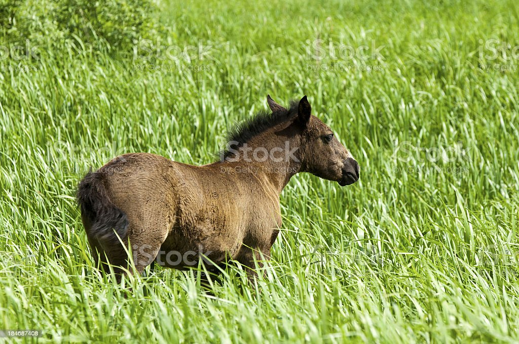 horse royalty-free stock photo