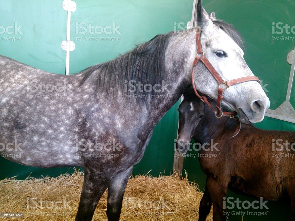 cheval stock photo