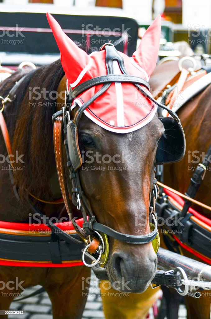 Horse portrai in Veinna Austria stock photo