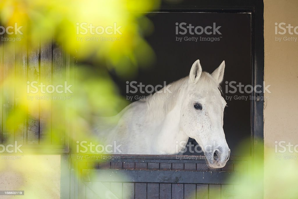 Horse Portrait in Stable stock photo