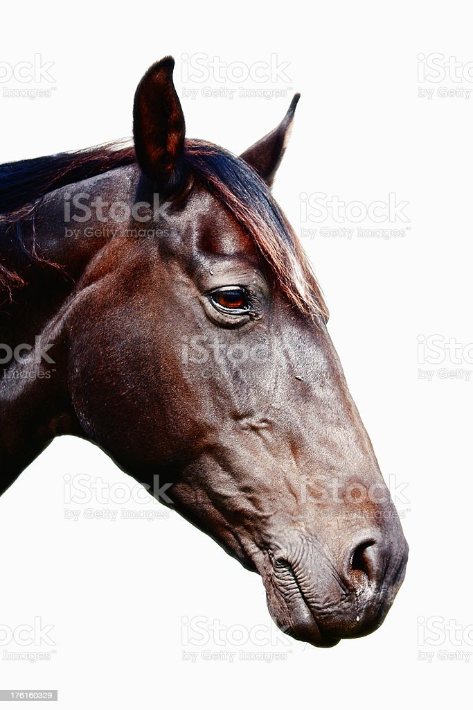 Horse portrait royalty-free stock photo