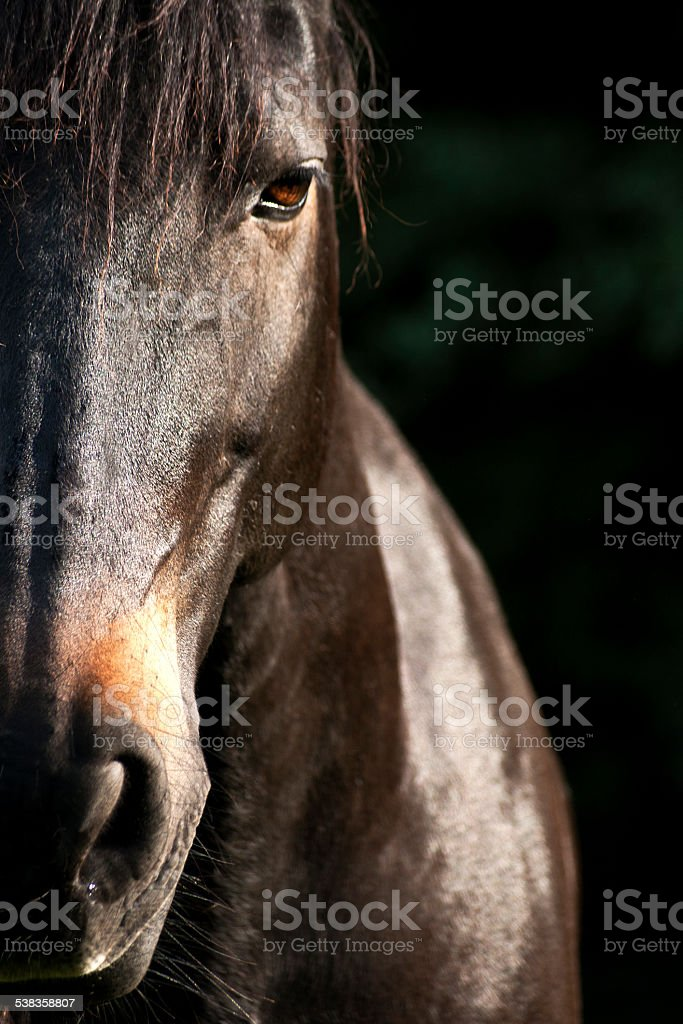 Pferd Portrait stock photo