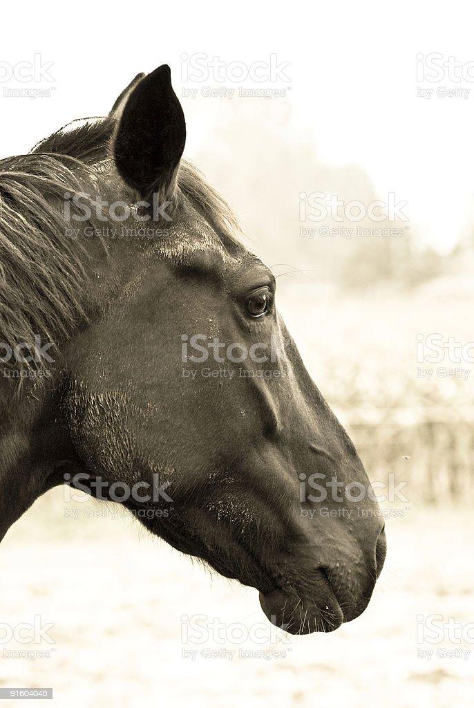 Horse Power stock photo