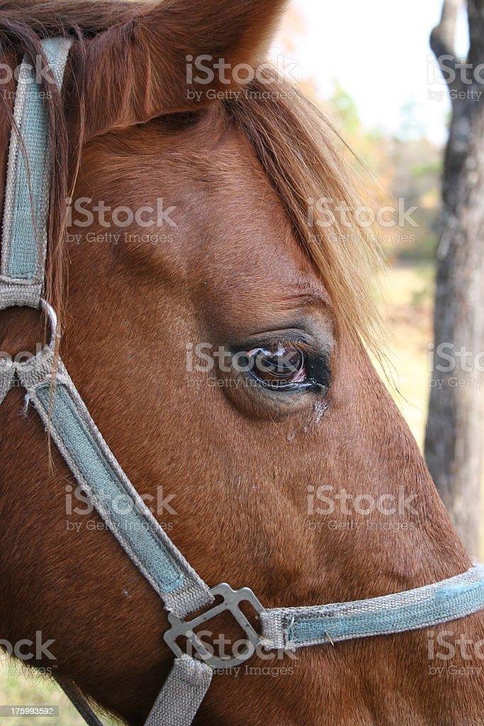 Horse Profile stock photo