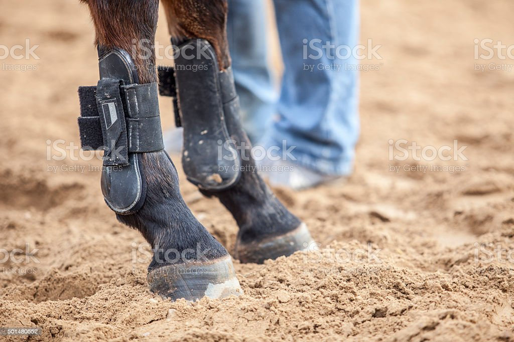 horse protections boots for legs at jumping competition training stock photo
