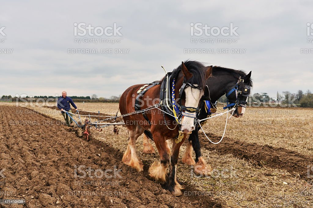 Horse Pulled Plough stock photo