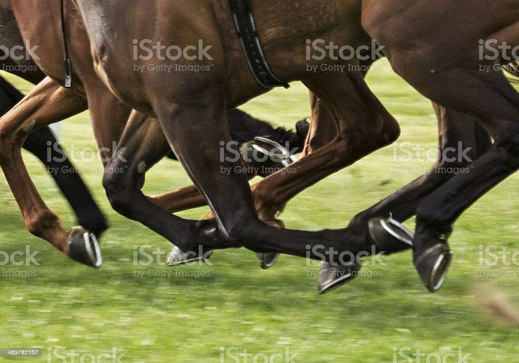 horse race stock photo