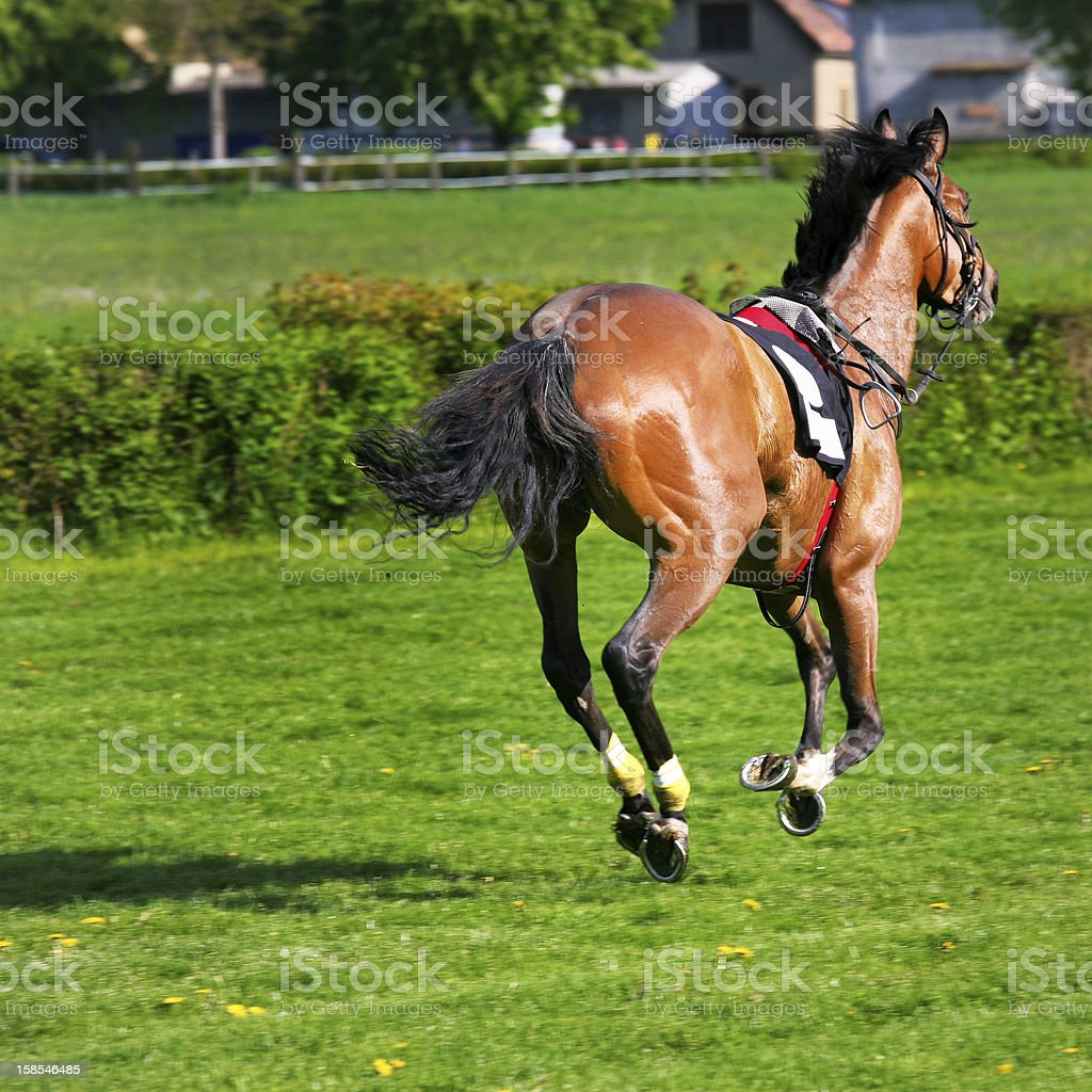 Horse Racing Accident stock photo