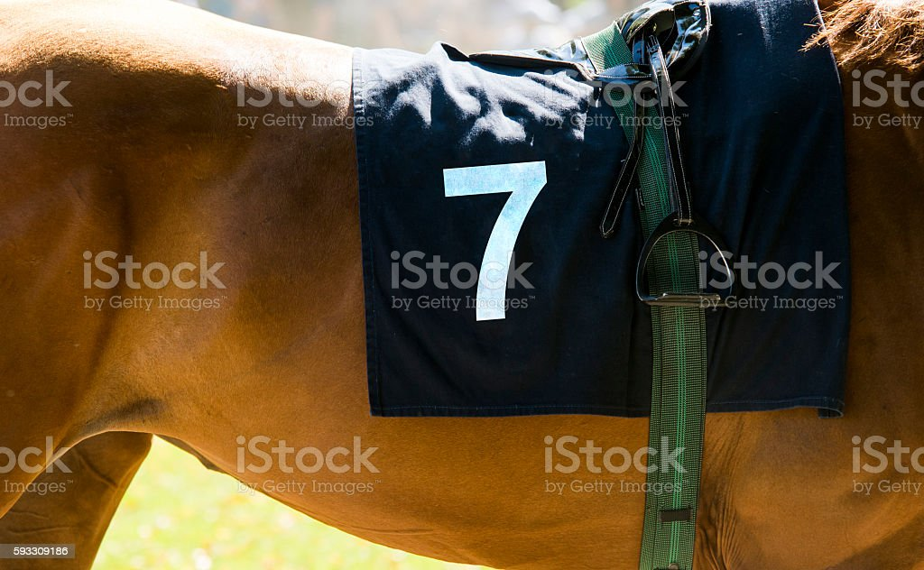 Horse racing, close up on brown horse with number 7 stock photo