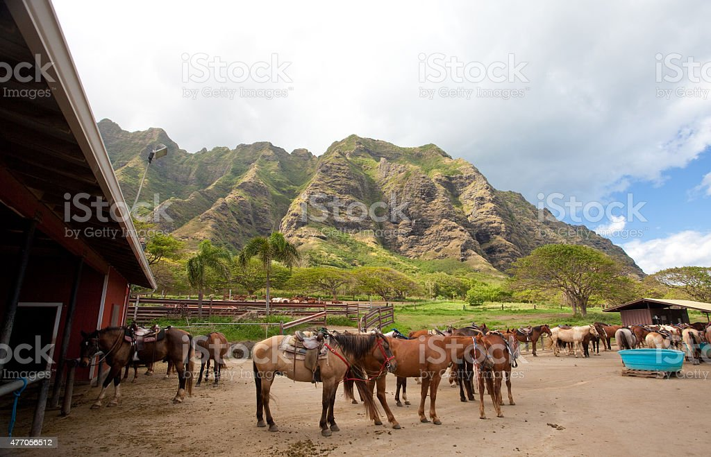 Horse Ranch in Hawaii on Oahu stock photo