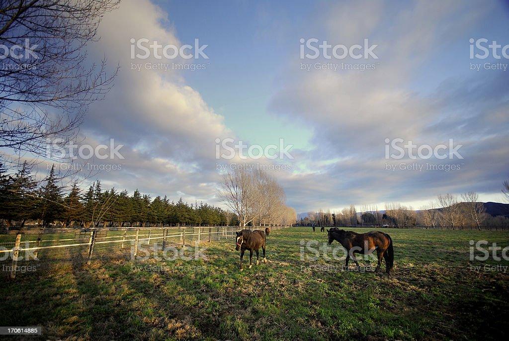 Horse Ranch royalty-free stock photo