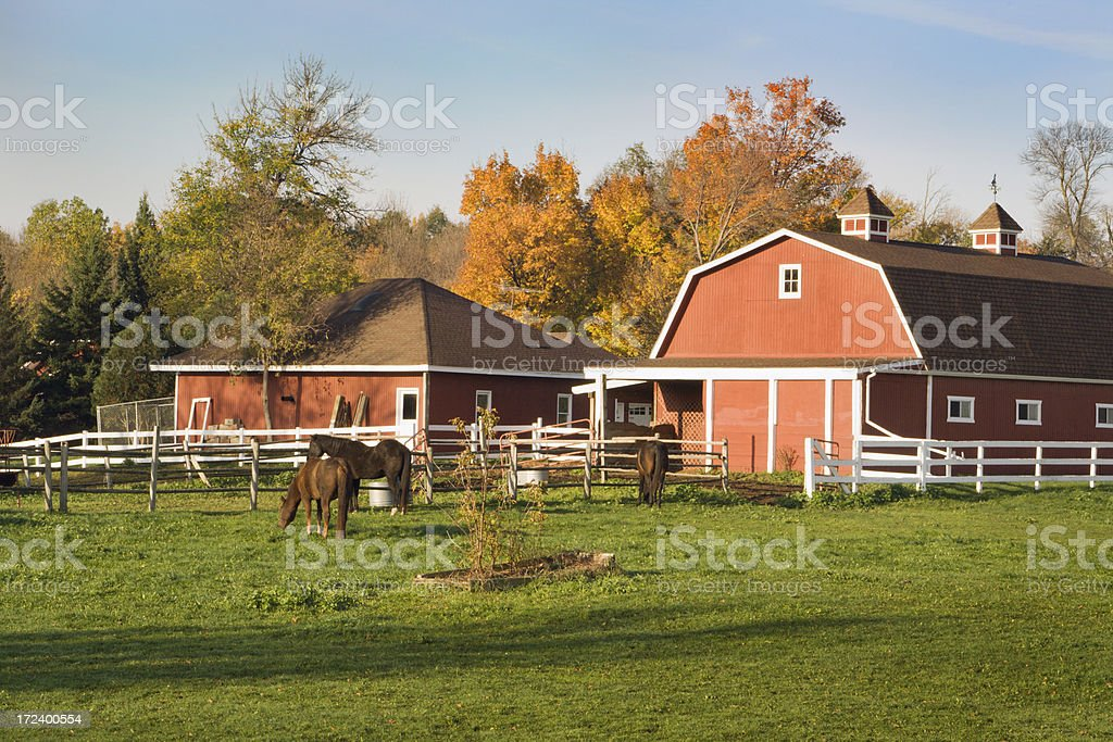 Horse Ranch with Pasture, Stable Barn and Farmhouse in Autumn royalty-free stock photo