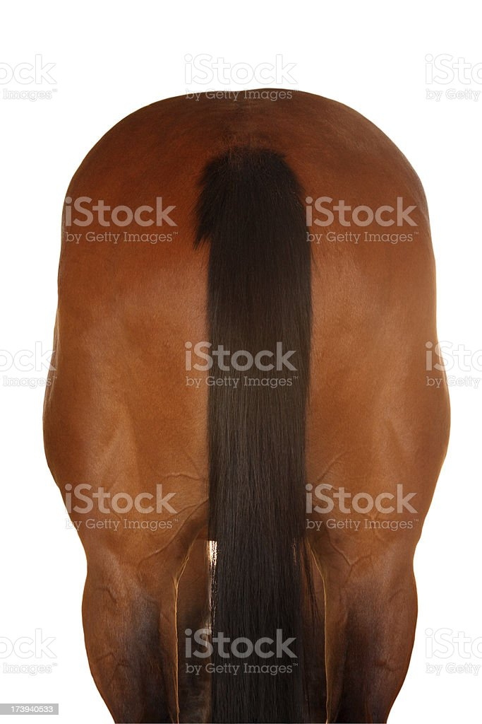 Horse Rear stock photo