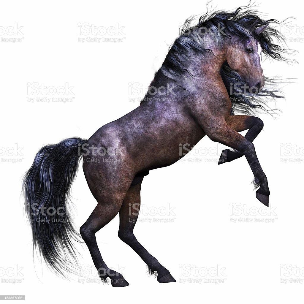 Horse Rearing on White Background stock photo