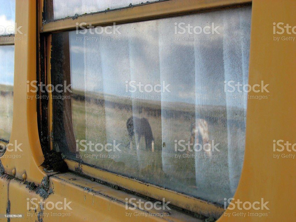 Horse Reflexion Lizenzfreies stock-foto