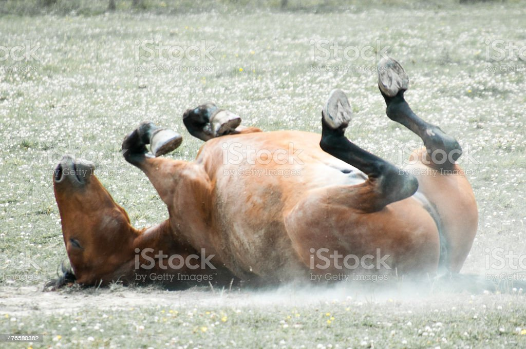 horse relaxing in the summer sun stock photo