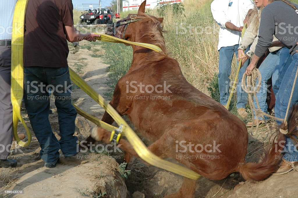Horse Rescue royalty-free stock photo