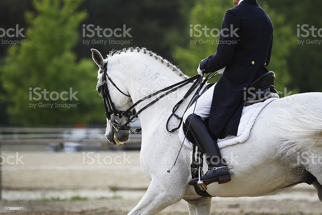 Horse rider and white horse in a dressage competition stock photo