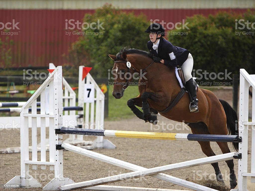 Horse & Rider Competing on a Stadium Jump Course stock photo
