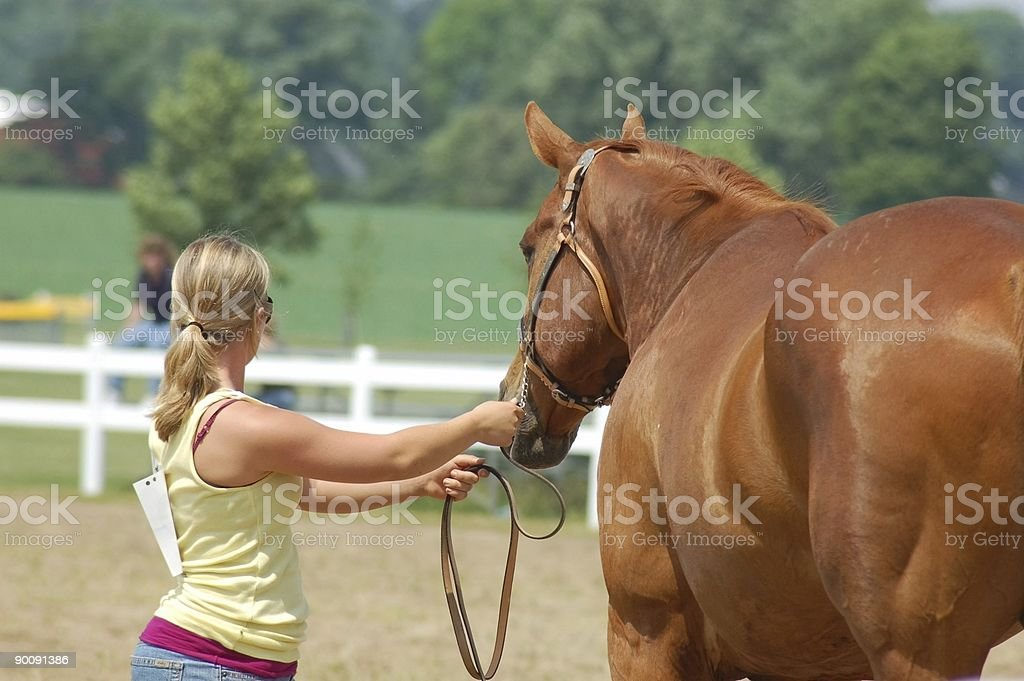 Horse & Rider Practicing for the Show Ring royalty-free stock photo