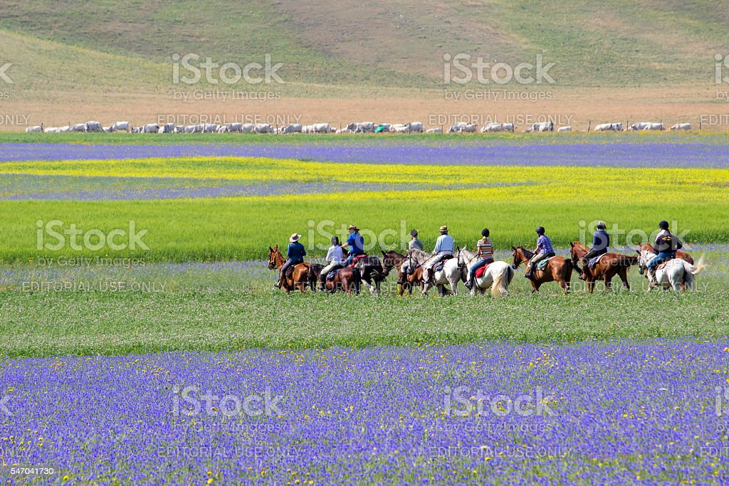 Horse riders riding on Flower field - Landscape stock photo