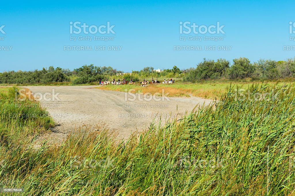 horse riding in the camargue stock photo