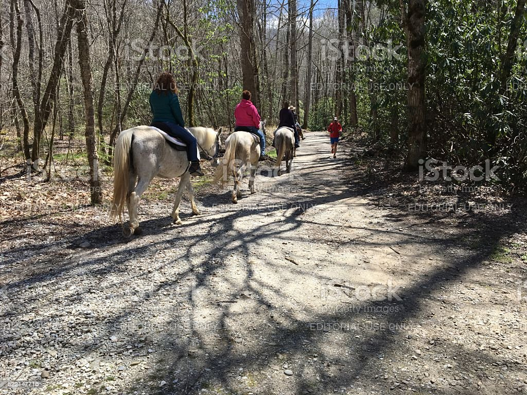 Horse riding in the Smokies stock photo