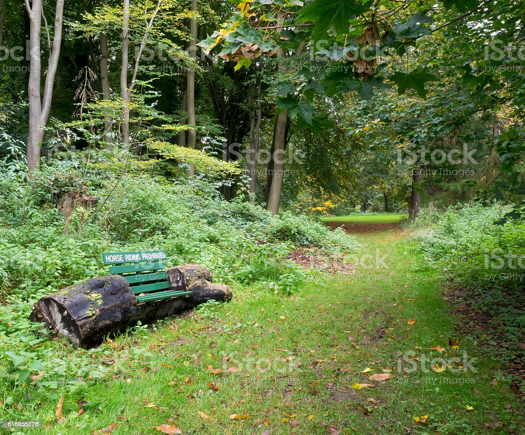 Horse riding sign on a tree trunk bench in forest stock photo