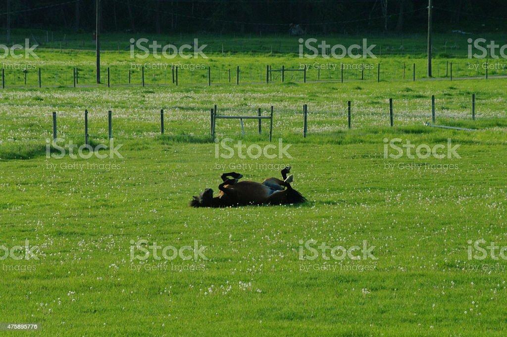 Caballos en pasto ondulantes foto de stock libre de derechos