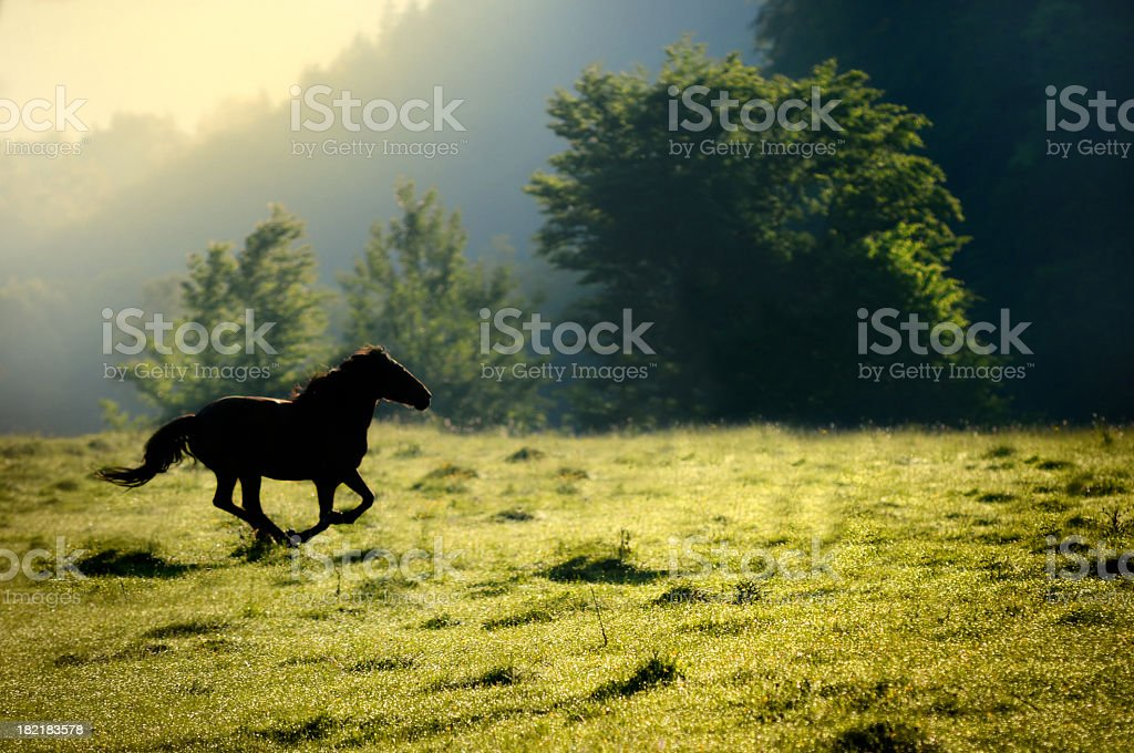 horse running in nature royalty-free stock photo