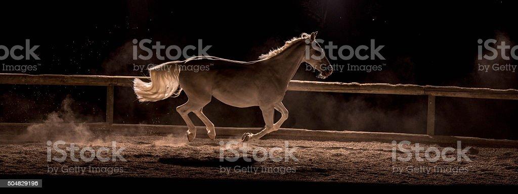 Horse running stock photo