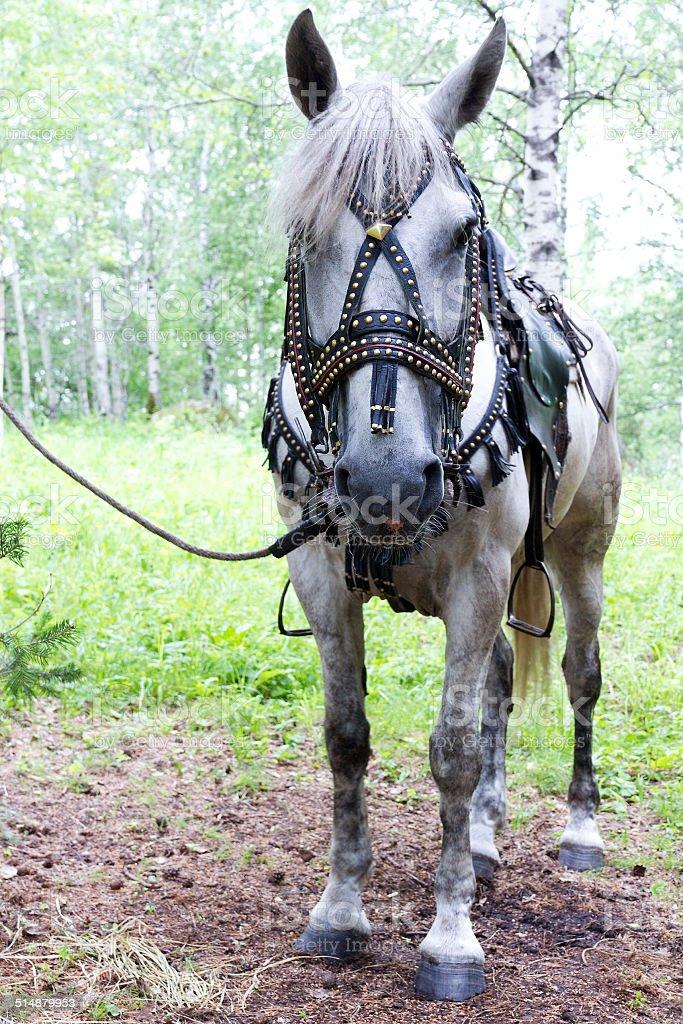 Horse saddled stock photo