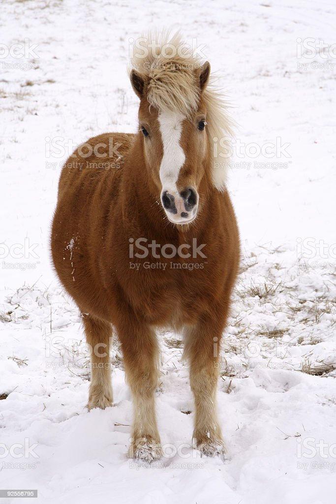horse scenes - cold stare royalty-free stock photo