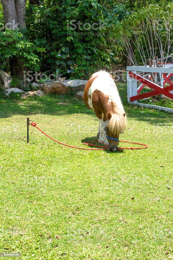 Horse scrubby stock photo