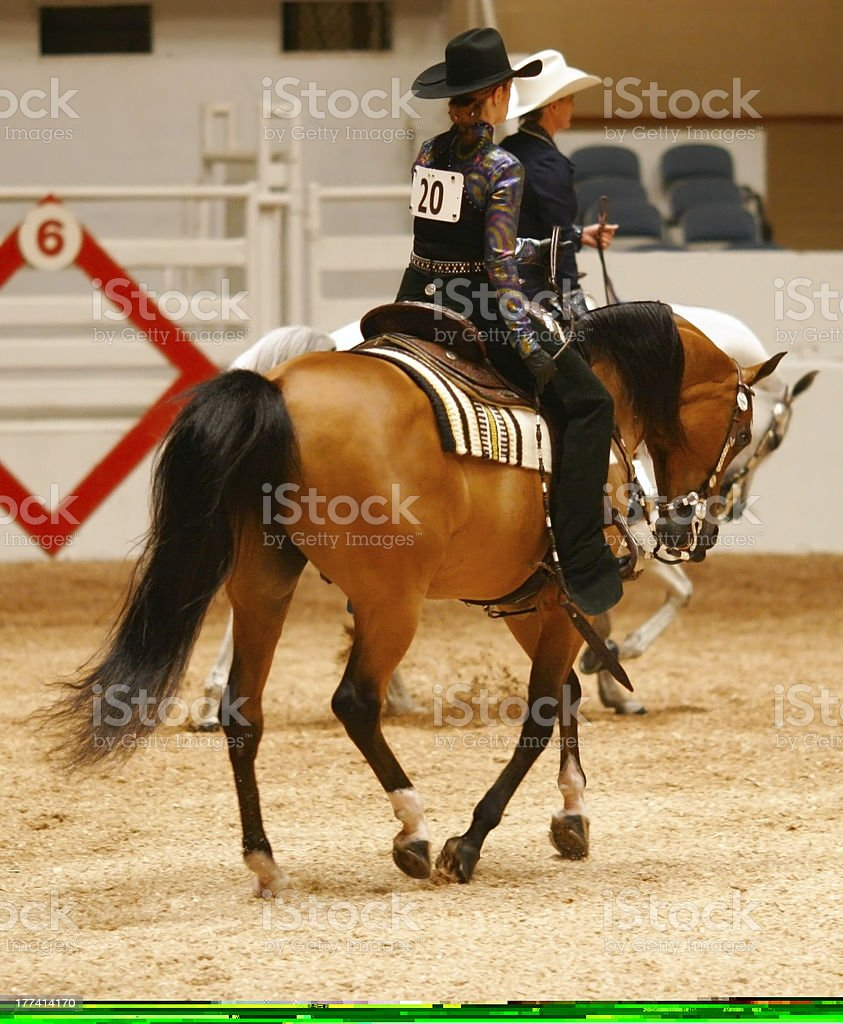 Horse show lope stock photo