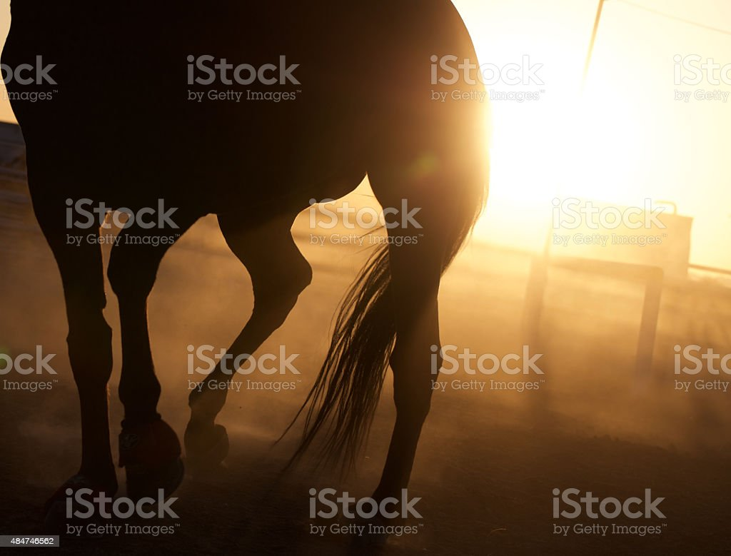 Horse silhouette stock photo