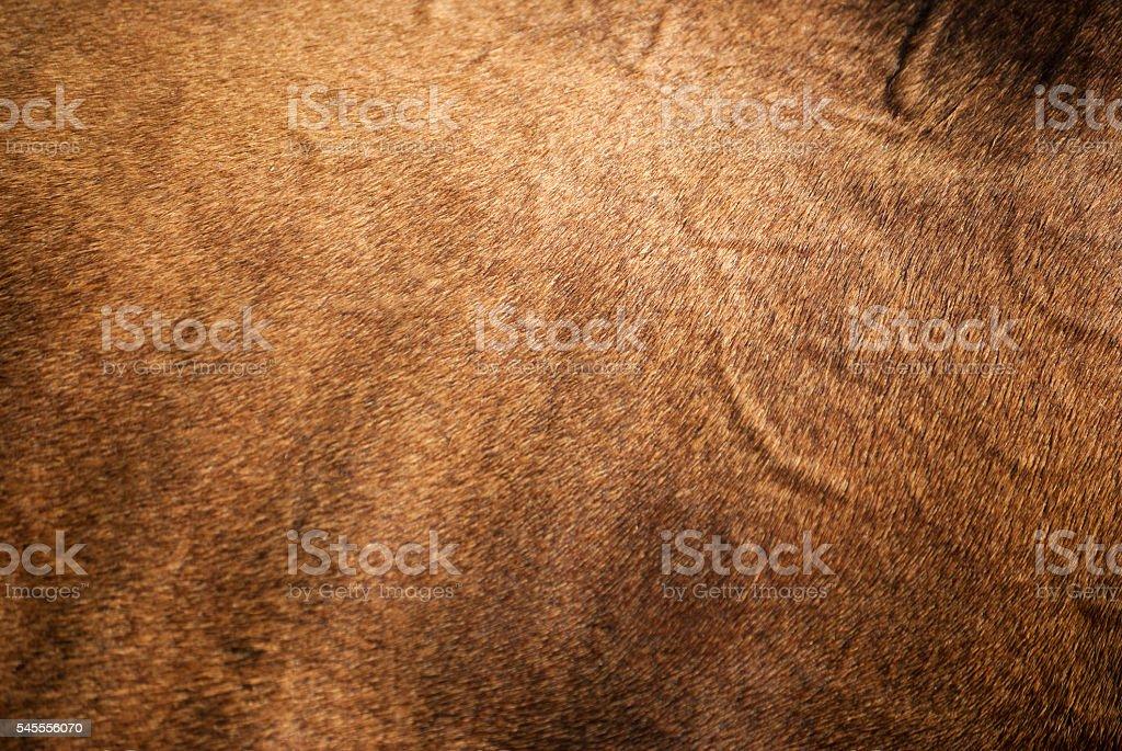 Horse Skin stock photo