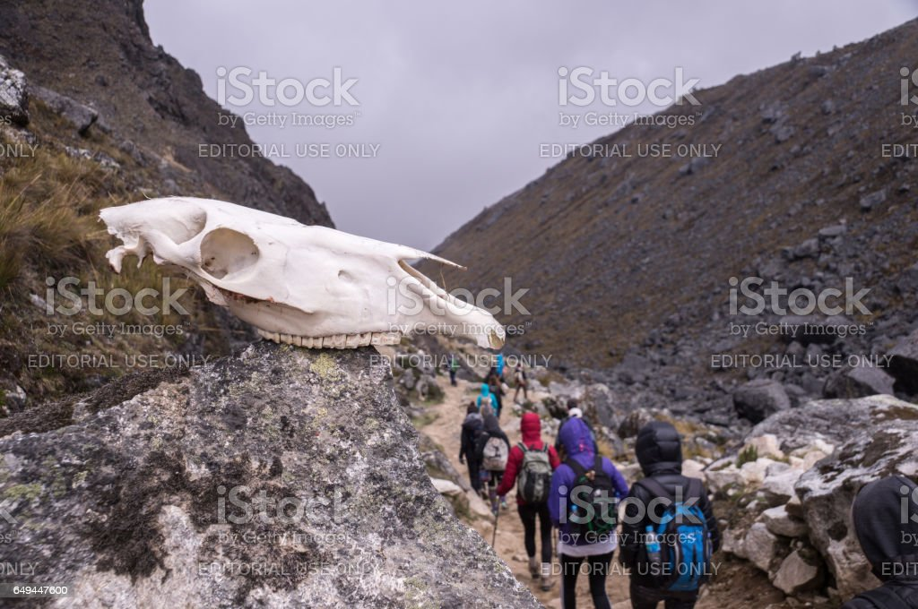 Horse skull on a rock in mountains stock photo