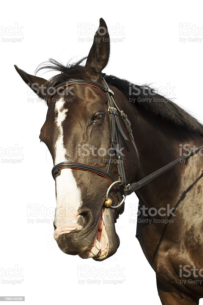 Horse smiling stock photo