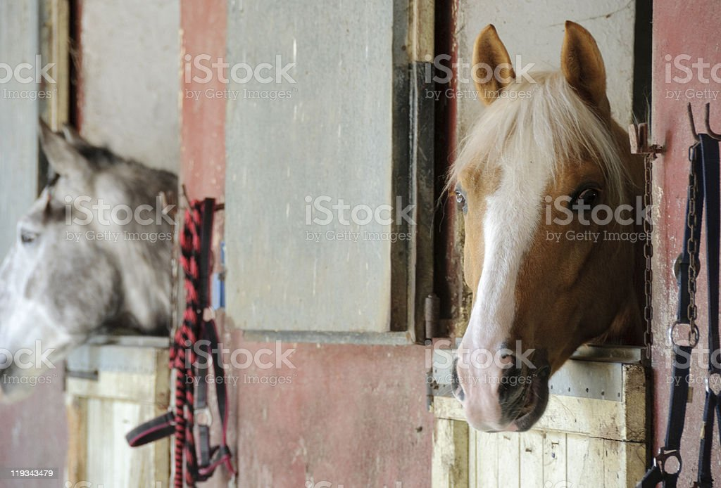 Horse stable royalty-free stock photo