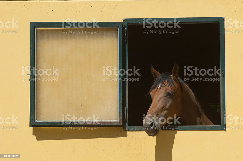 Horse stabled at the window royalty-free stock photo