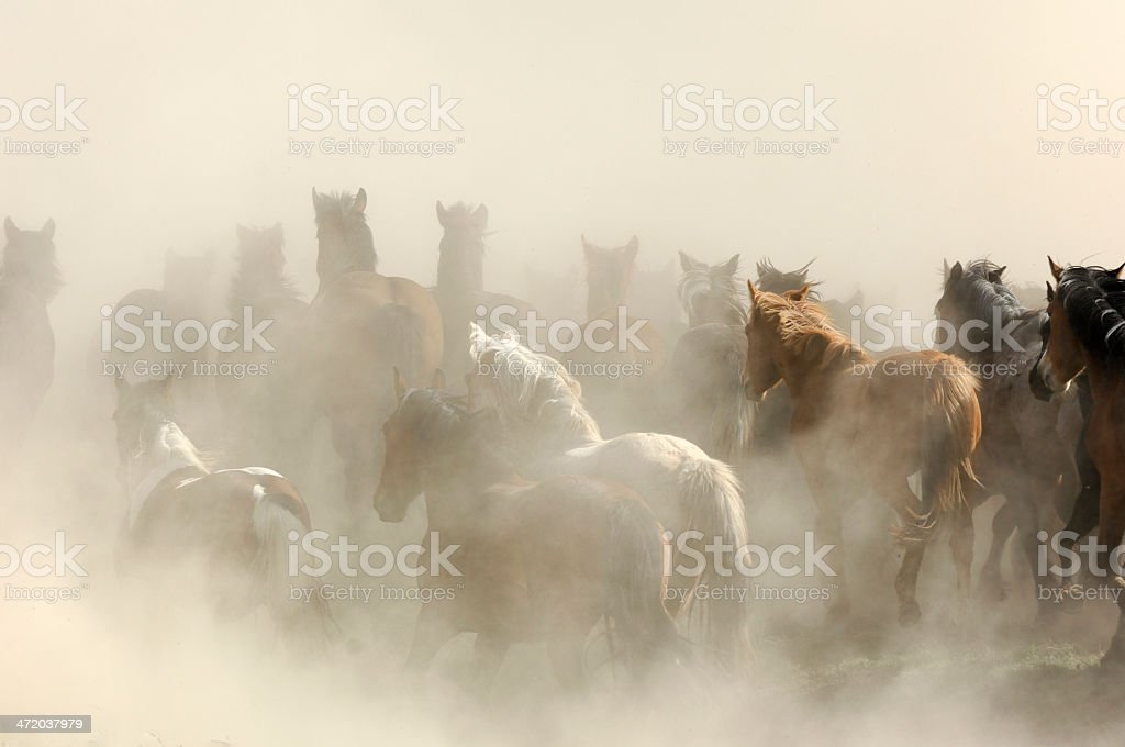 Horse Stampede in the Dust stock photo